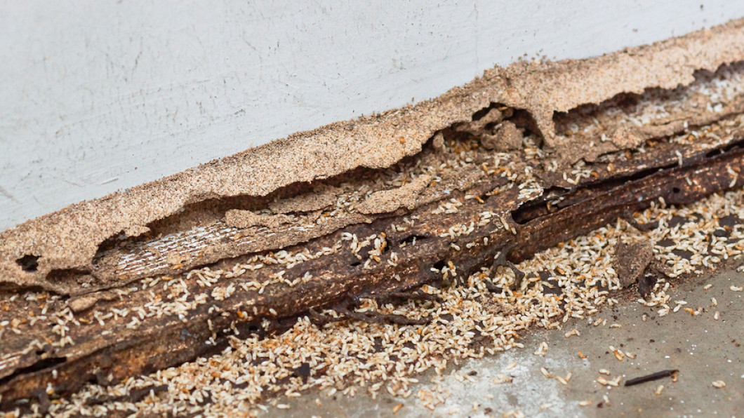 Learn more about how to handle termites in your home or business
